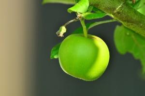 apple-1532055_1920